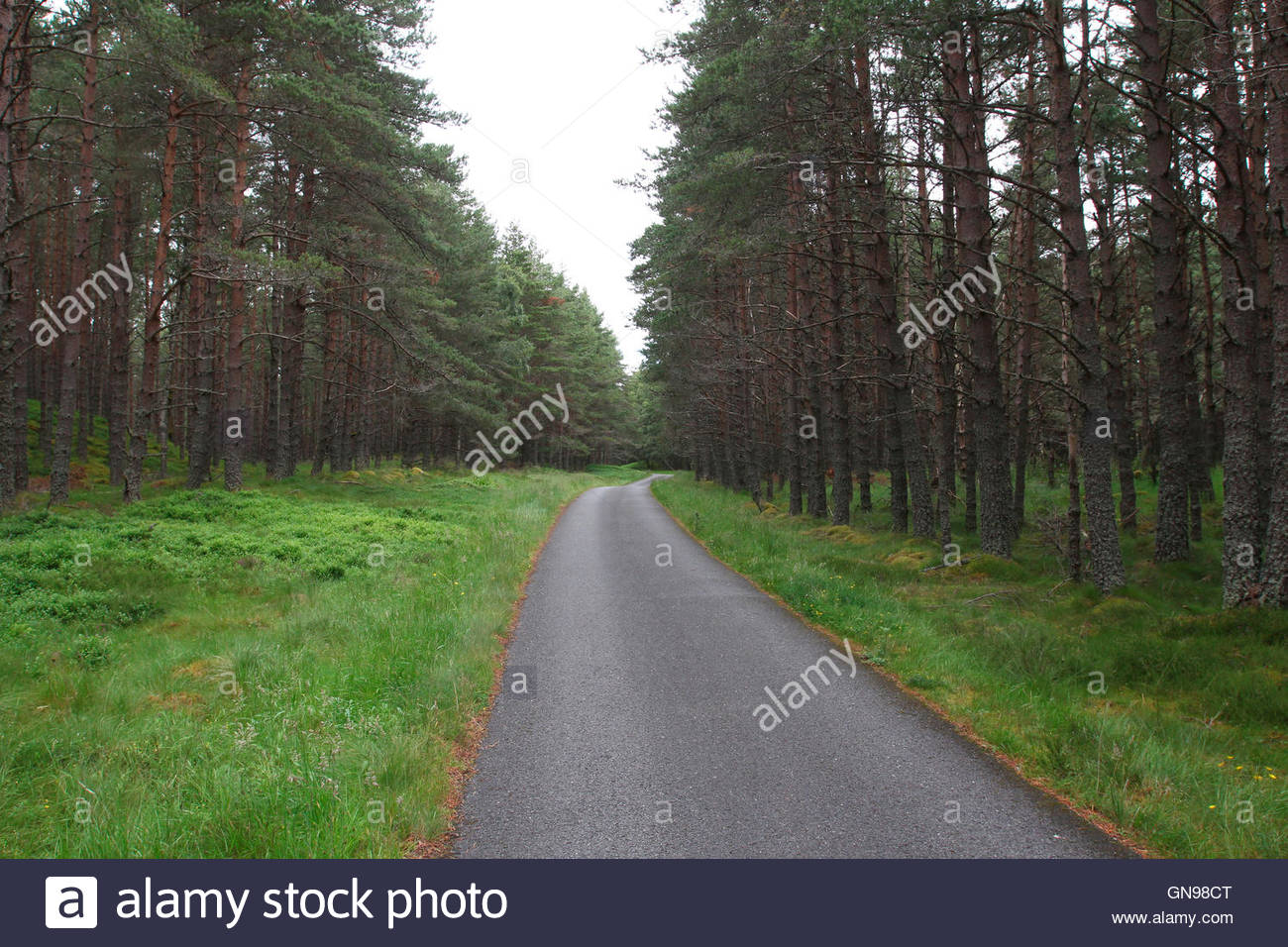 road through conifer forest, glen feshie, cairngorms national park, grampian mountains, highlands, scotland, united - Stock Image