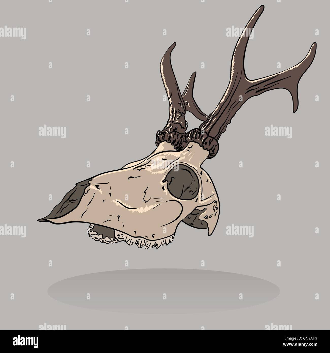 Vector illustration of an isolated deer skull . Profile view. - Stock Image
