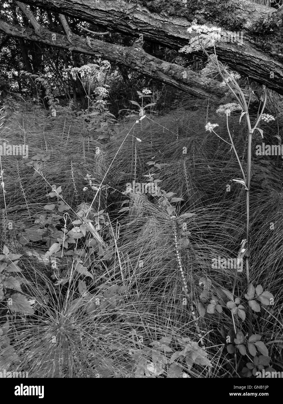 Textured plants within a forest. - Stock Image
