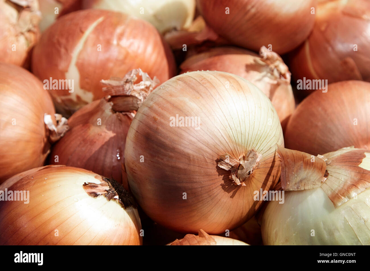 fresh brown spanish onions on display on a greengrocers food stall in the uk - Stock Image