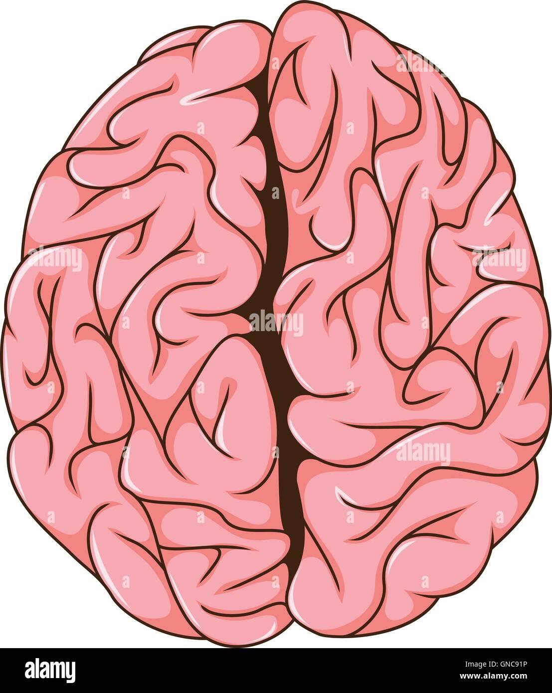 human left and right brain cartoon - Stock Image