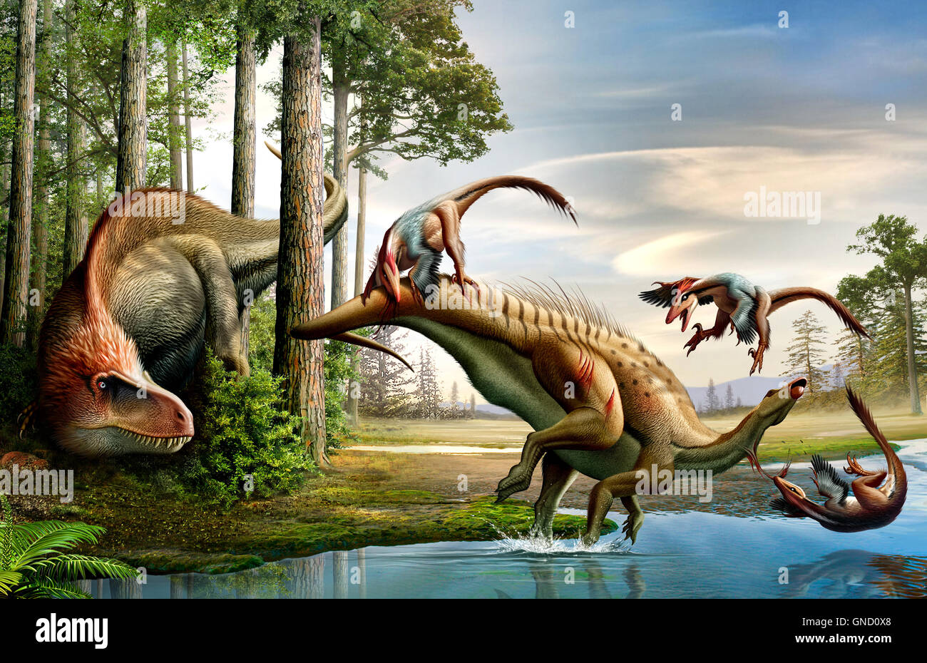 A Cretaceous lion (Acrocanthosaurus) observing his meal (Tenontosaurus) prepared by Cretaceous wolvs (Deinonychus) - Stock Image