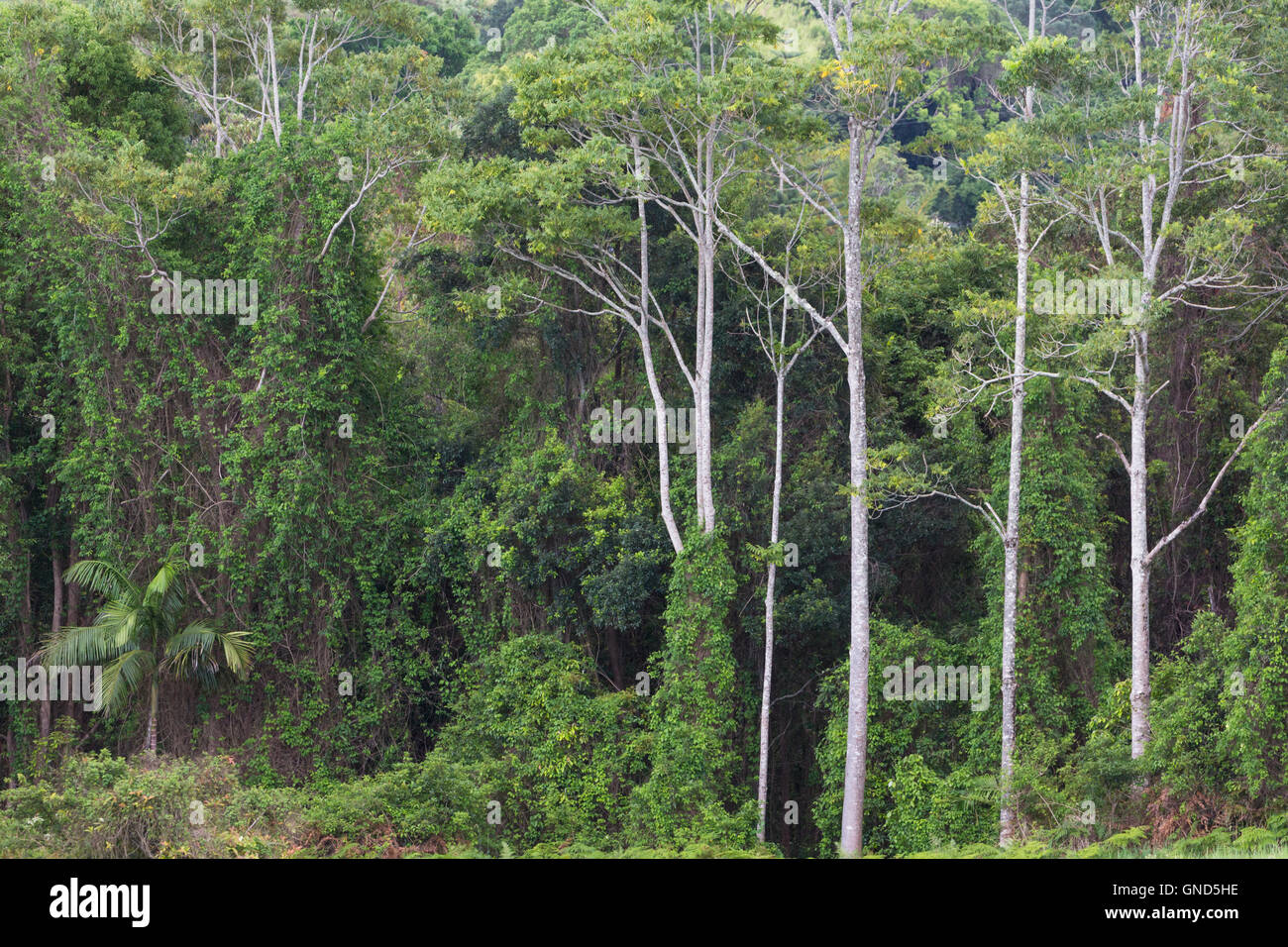 Semi tropical rain forest inland from the Gold Coast, Queensland, Australia. - Stock Image
