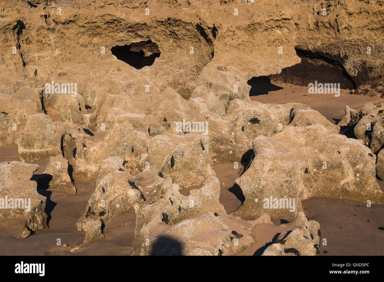 Rocks with sharp edges and holes on the beach of Atlantic Ocean in Morocco during the low tide. - Stock Image