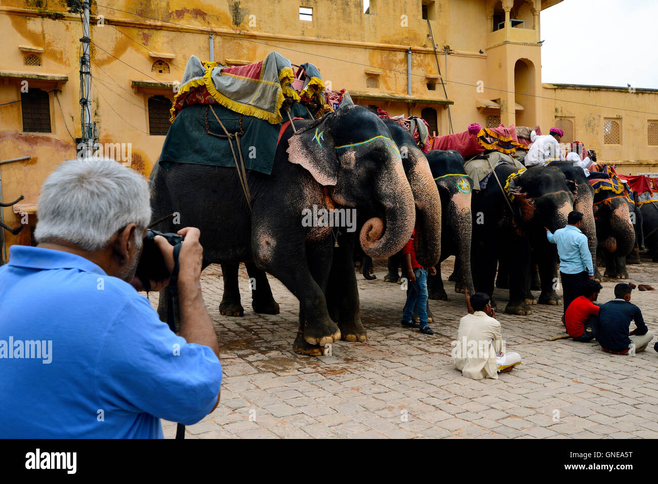 Man capturing photograph of Elephants in Amber fort, Jaipur, Rajasthan, India - Stock Image