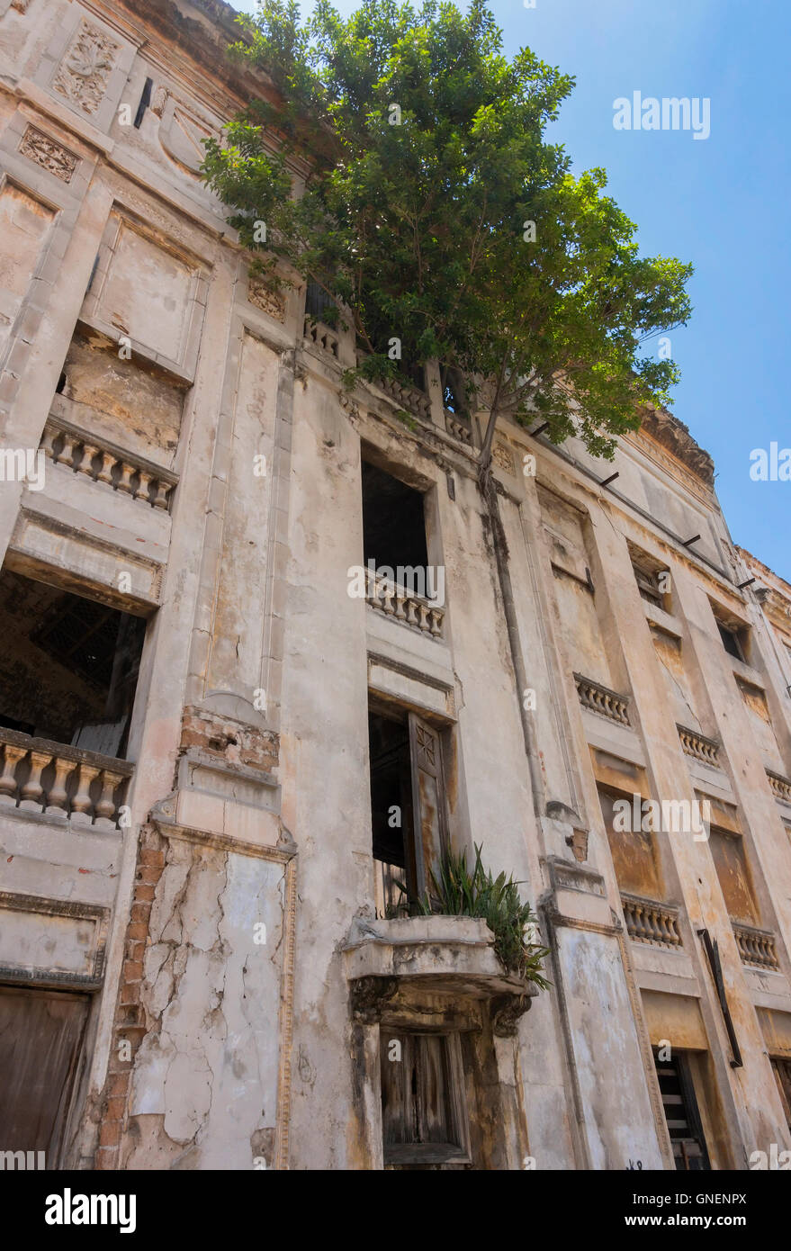A tree growing from the fourth floor of an abandoned building in downtown Havana, Cuba. - Stock Image