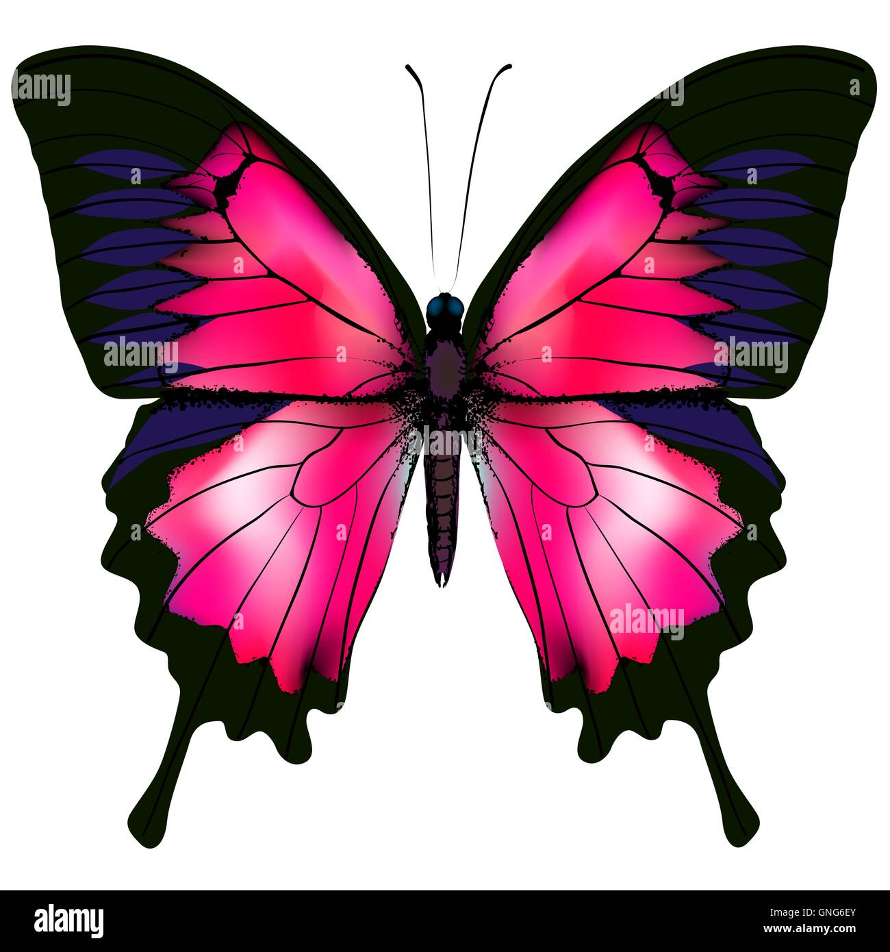 Butterfly. Vector illustration of red butterfly isolated on white background. - Stock Image