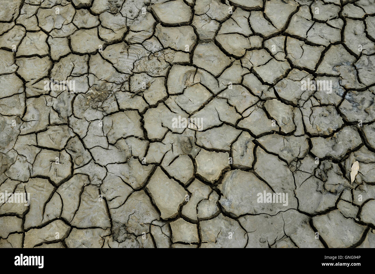 Close up of pattern of Dry mud for texture or background - Stock Image