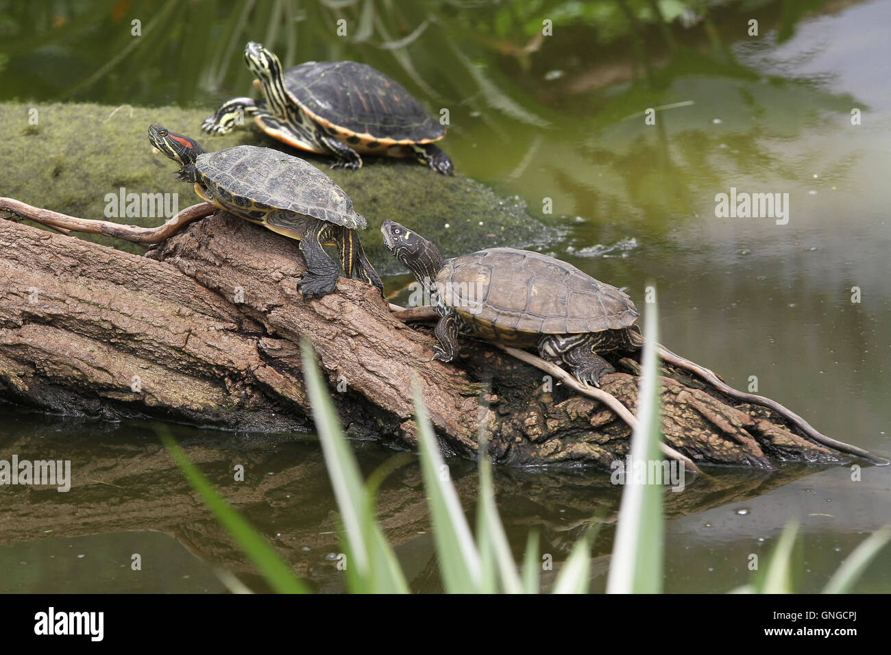 Found Turtle In The Reptile Rescue Center In Munich Freimann