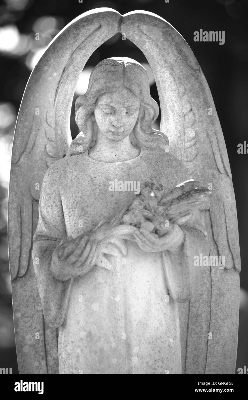 Popular Cemetery graveyard stone angel statue. Black and white image Stock  GQ95