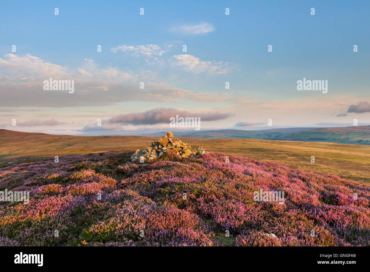 Flowering Heather and the View Over Weardale from the West Top of Catterick Hill, Weardale, County Durham UK - Stock Image