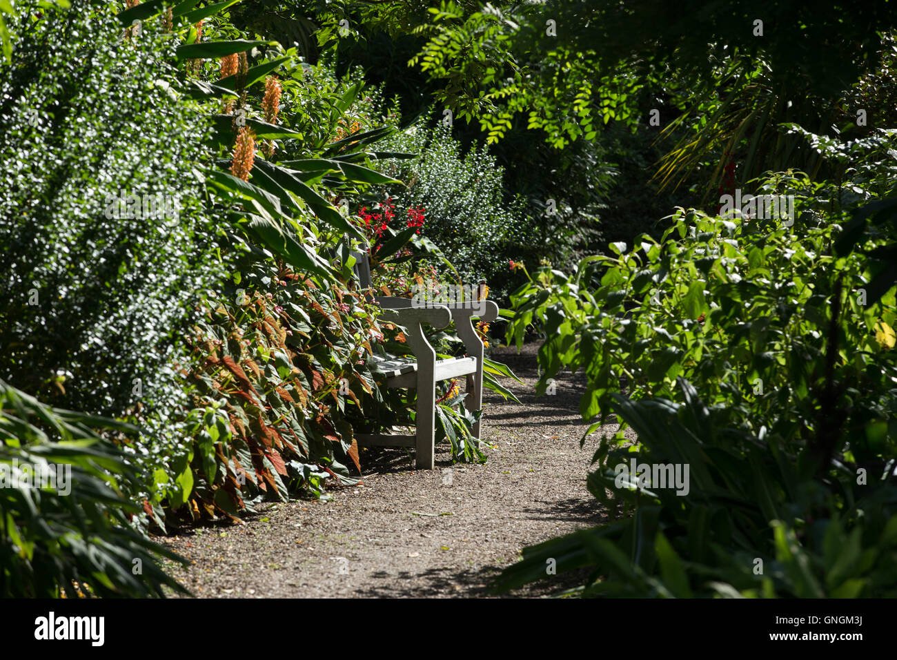 Foliage spills onto a garden path, almost completely hiding a secluded bench at RHS Rosemoor, Devon, UK - Stock Image