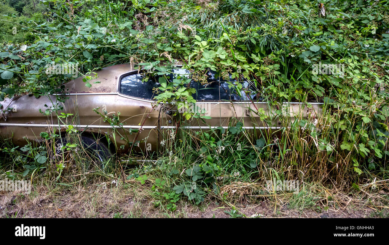 A car abandoned to nature in Washington state - Stock Image