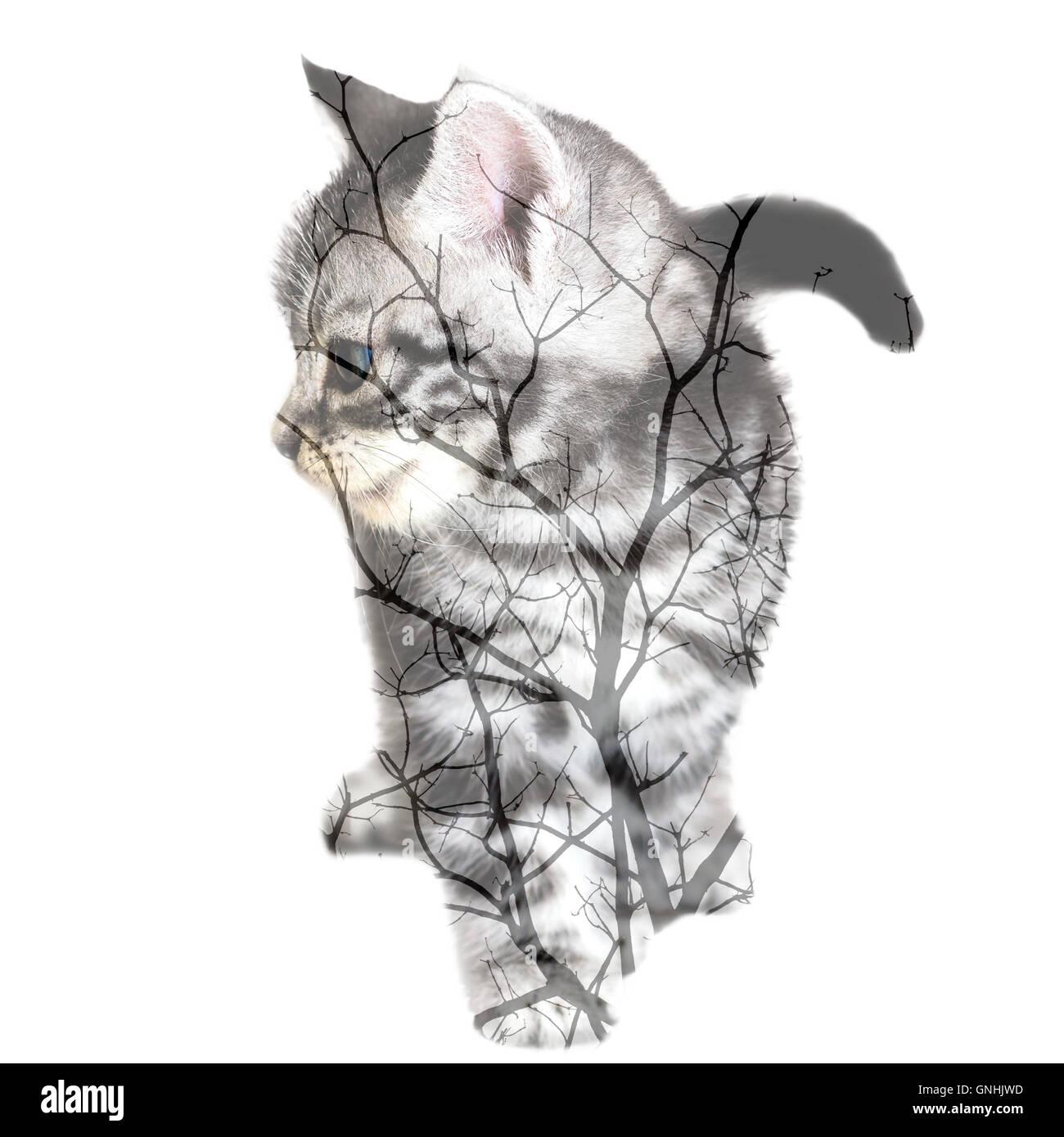 Dead Kitten Stock Photos & Dead Kitten Stock Images - Alamy