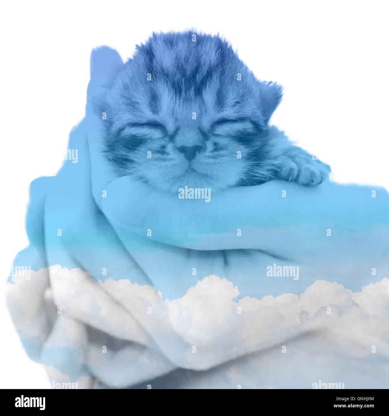 American shorthair kitten double exposure with clound in the blue sky - Stock Image