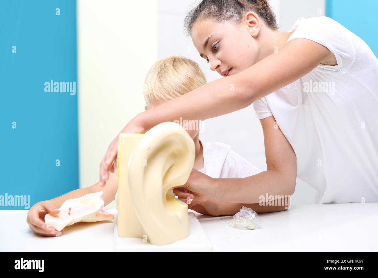 Help Scientific Model Of The Human Ear Anatomy Of A Child On