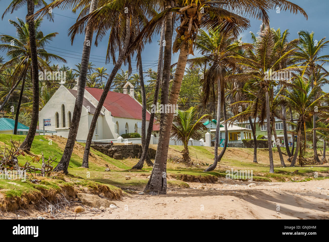 Church Among The Coconut Palms Barbados West Indies - Stock Image