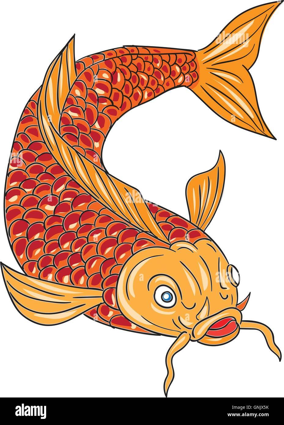Koi Nishikigoi Carp Fish Swimming Down Drawing Stock Vector Art ...