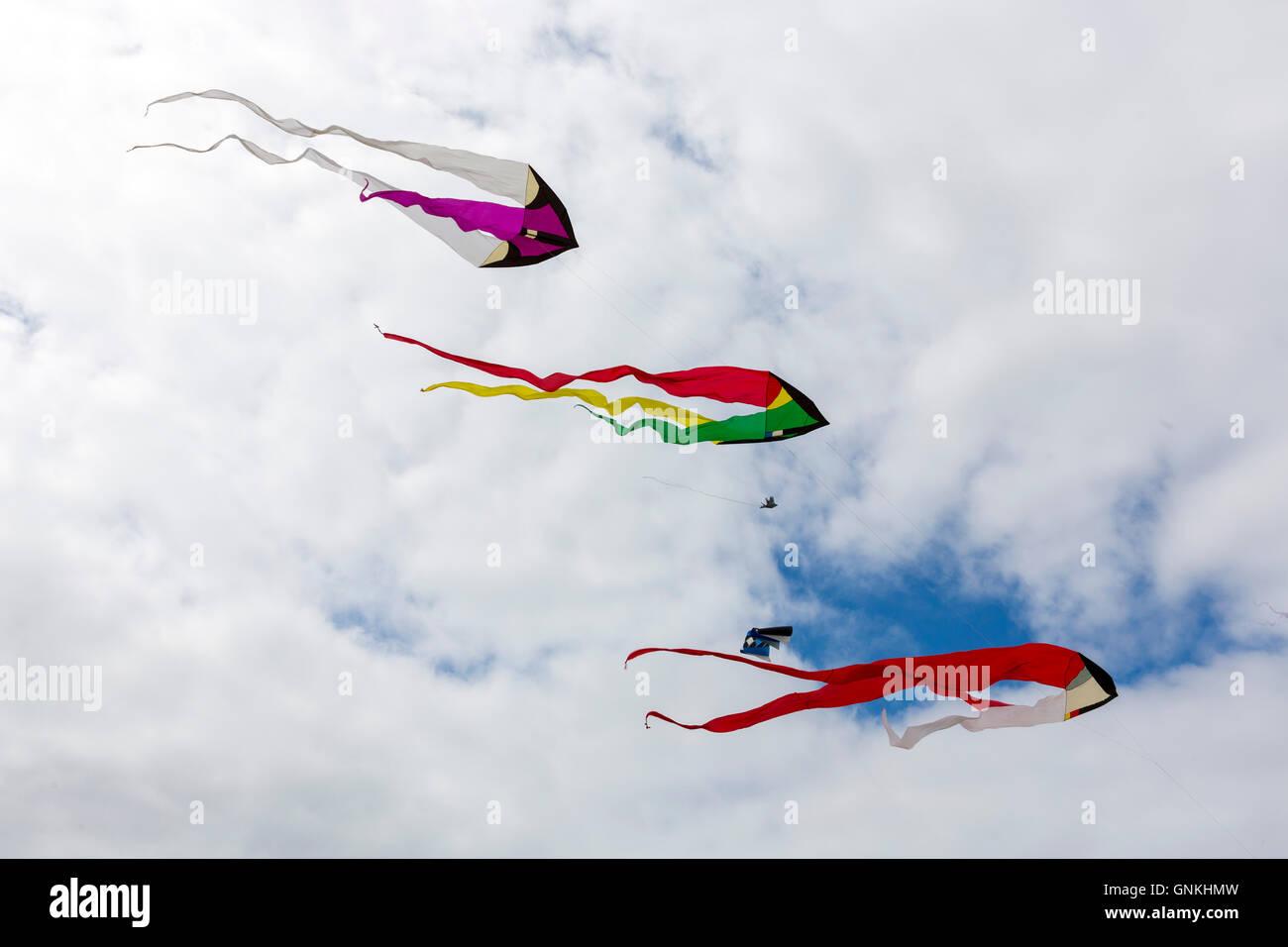 Kite festival of bright color kites in the sky above Fano Island - Fanoe - South Jutland, Denmark - Stock Image