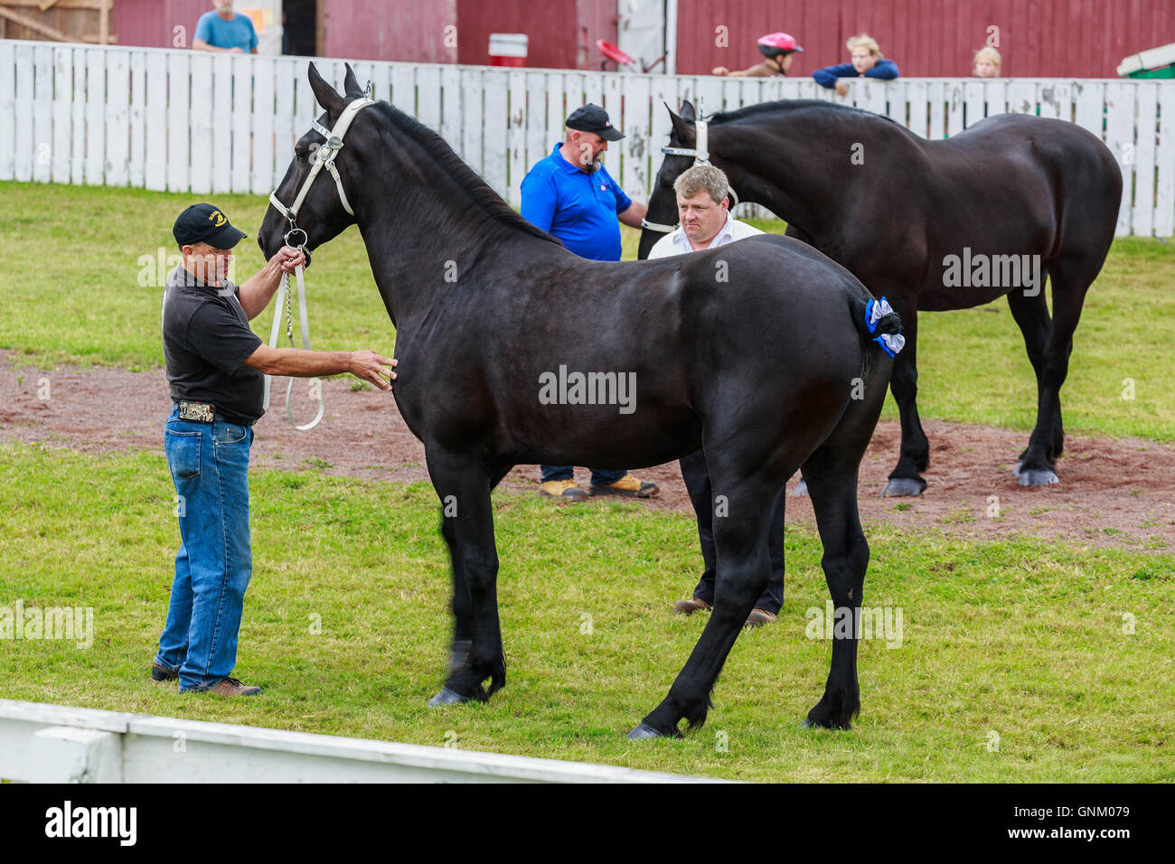 Prince Edward Island, Canada, Aug 27,2016. Competitors show horses at the Prince Edward Island Plowing Match & - Stock Image