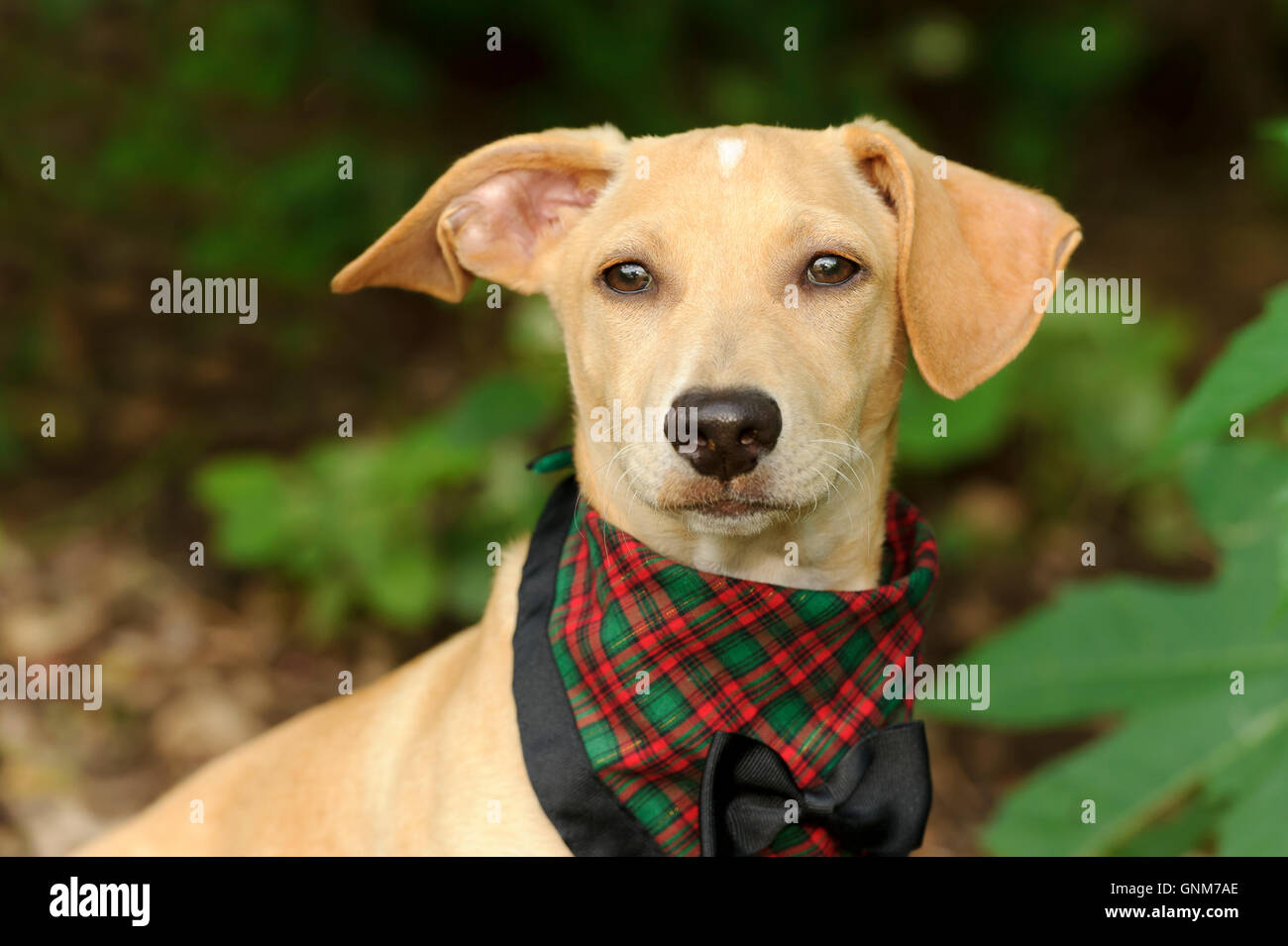 Cute Dog Costume Is A Puppy Dog All Dressed Up In His Bow Tie Best