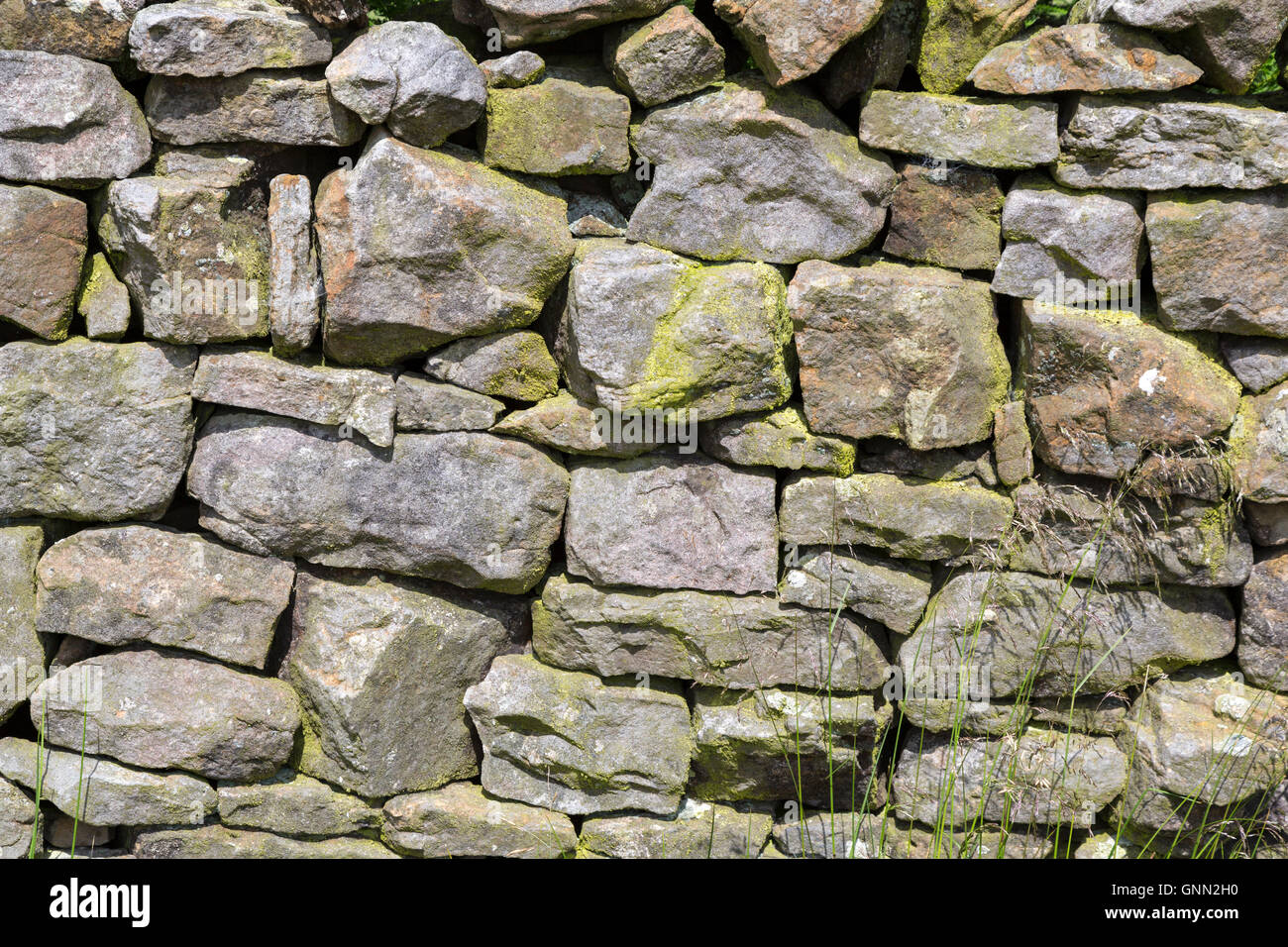 Cumbria, England, UK.  Modern Stone Wall Construction Delineating Farmers' Fields along Hadrian's Wall Footpath. - Stock Image