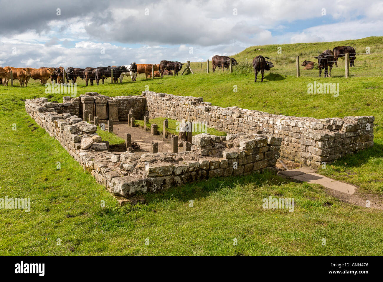 Northumberland, England, UK.  Brocolitia Mithraic Temple (Carrawburgh Temple of Mithras).  Hadrian's Wall Footpath. - Stock Image