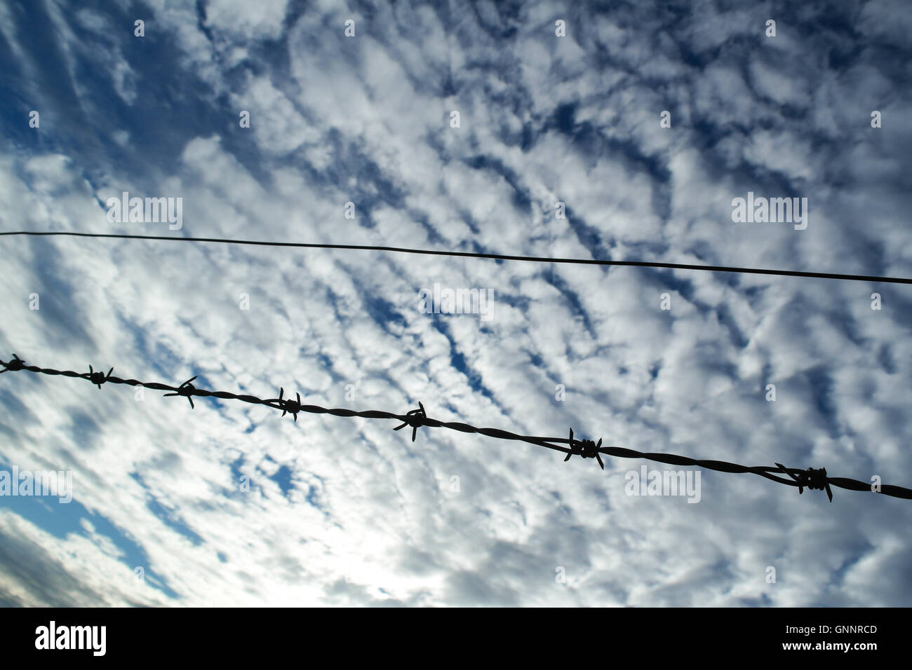Barb Wire Stock Photos & Barb Wire Stock Images - Alamy