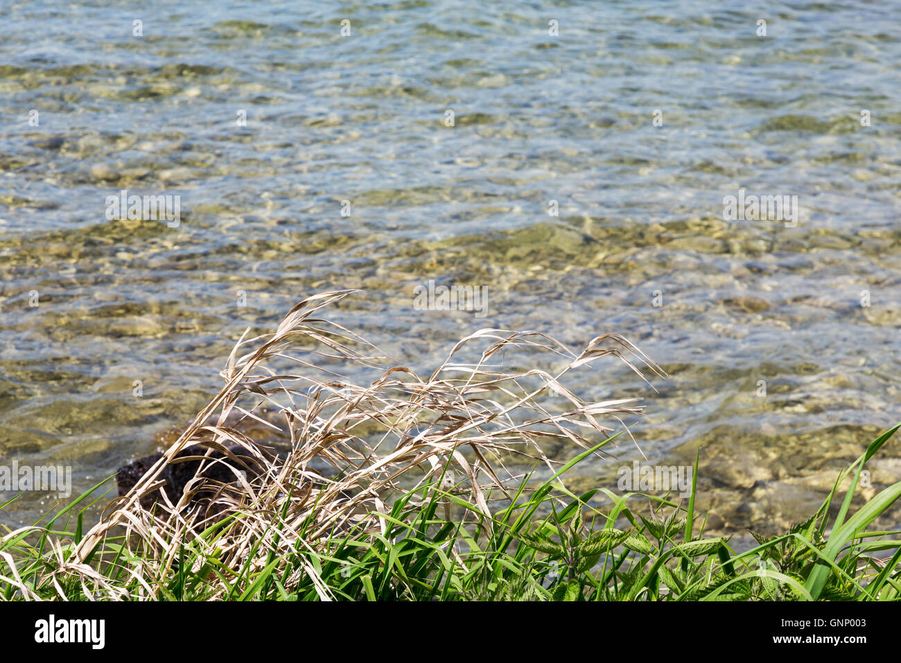 The grass on the lake shore in Rapperswil - Stock Image