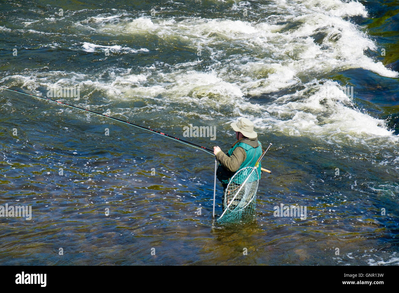 Angler standing in water below a weir fly fishing for Salmon in River Tweed. Ladykirk Berwickshire Scottish Borders - Stock Image