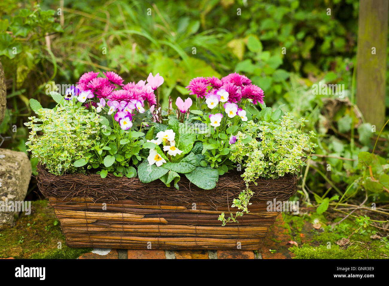 A small planter made from natural materials filled with herbs and small glowering plants - Stock Image