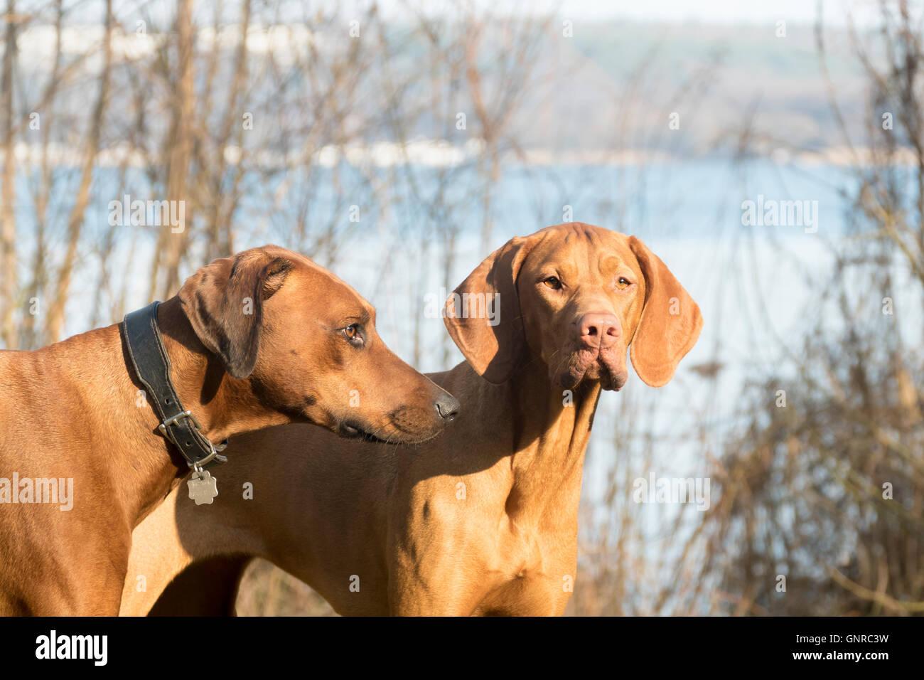 01.03.2016, Berlin, Deutschland - Hunde stehen auf einer Wiese. 0GB160301D002CARO.JPG [MODEL RELEASE: NOT APPLICABLE, Stock Photo