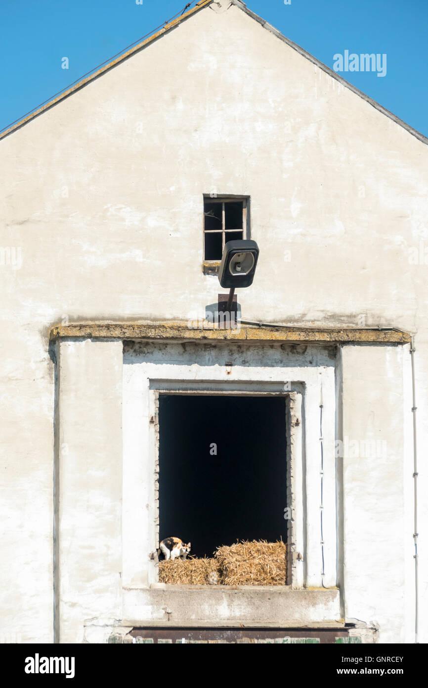 06.06.2016, Berlin, Deutschland - Heuboden einer Scheune mit Katze. 0GB160606D100CARO.JPG [MODEL RELEASE: NOT APPLICABLE, Stock Photo