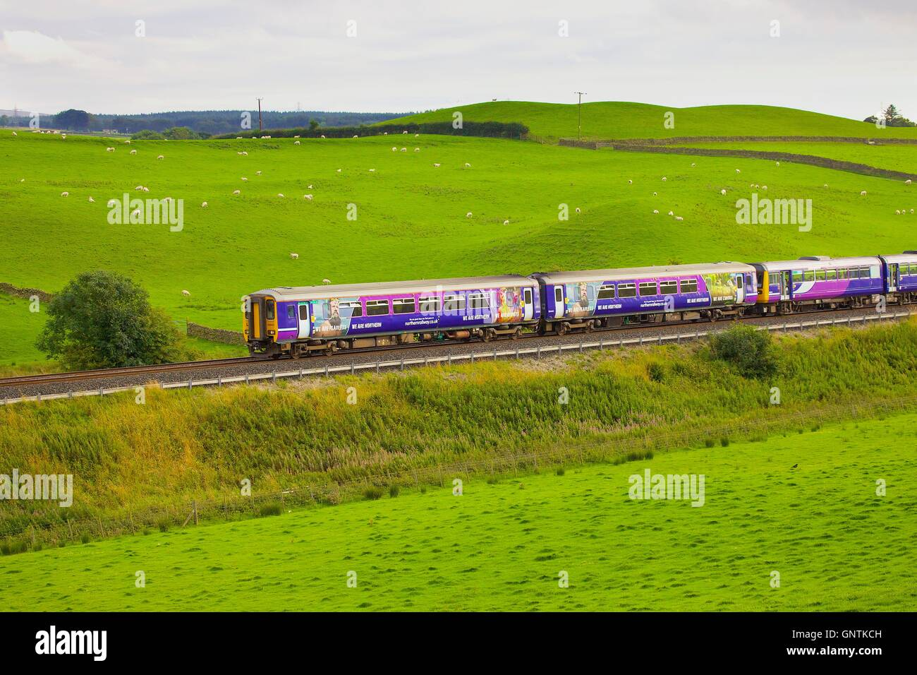 Class,156 super sprinter train and Class 142 Pacer train on an embankment. Gilsland, Cumbria, England, United Kingdom, - Stock Image
