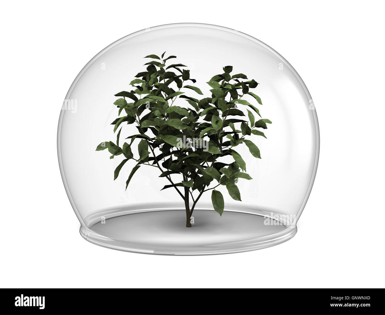 Plant Quarantine Cut Out Stock Images & Pictures - Alamy on plant teeth, plant sickness, plant container sizes, plant clinic, plant room, plant husbandry, plant health certificate, plant cube, plant plague, plant the bomb, plant the eye, plant quotes, plant insect pests, plant isolation,