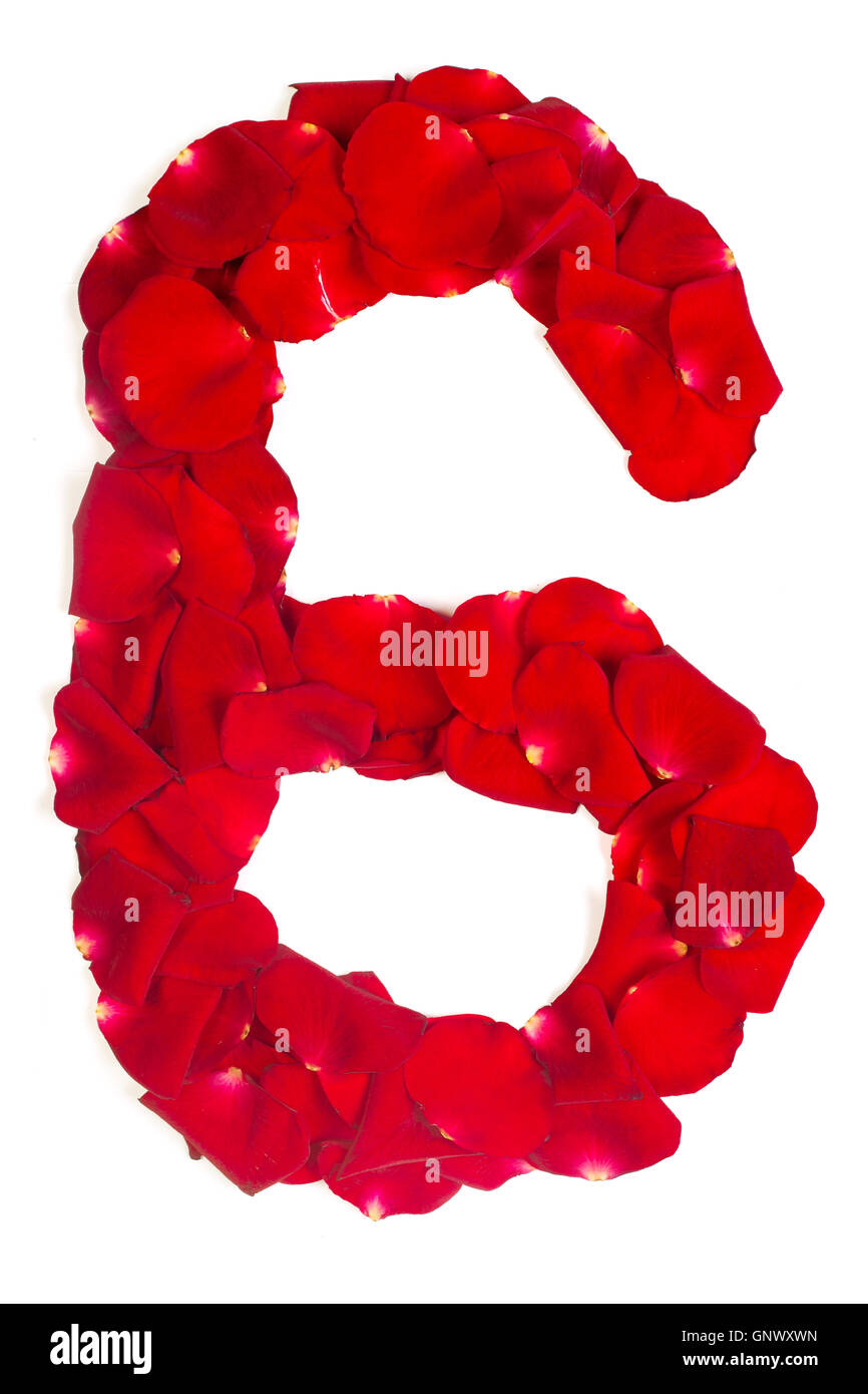 number 6 made from red petals rose on white - Stock Image