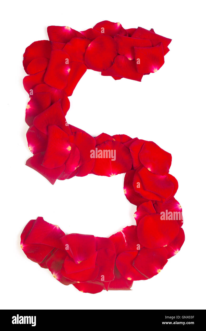 number 5 made from red petals rose on white - Stock Image