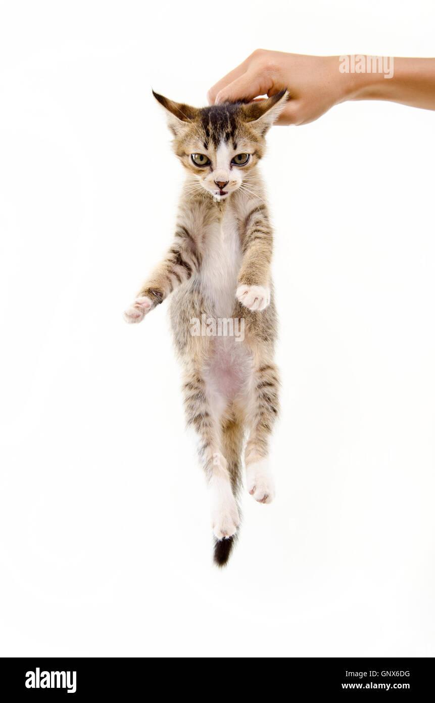 hand holding cat - Stock Image