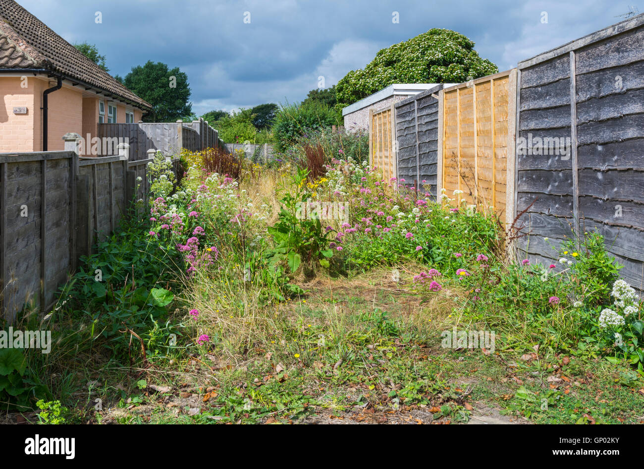 Overgrowth of plants and weeds in an alleyway. - Stock Image