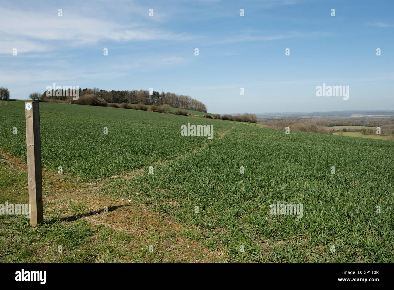 Footpath sign and path cut through stages of a winter wheat field on the North Wessex Downs in April Stock Photo