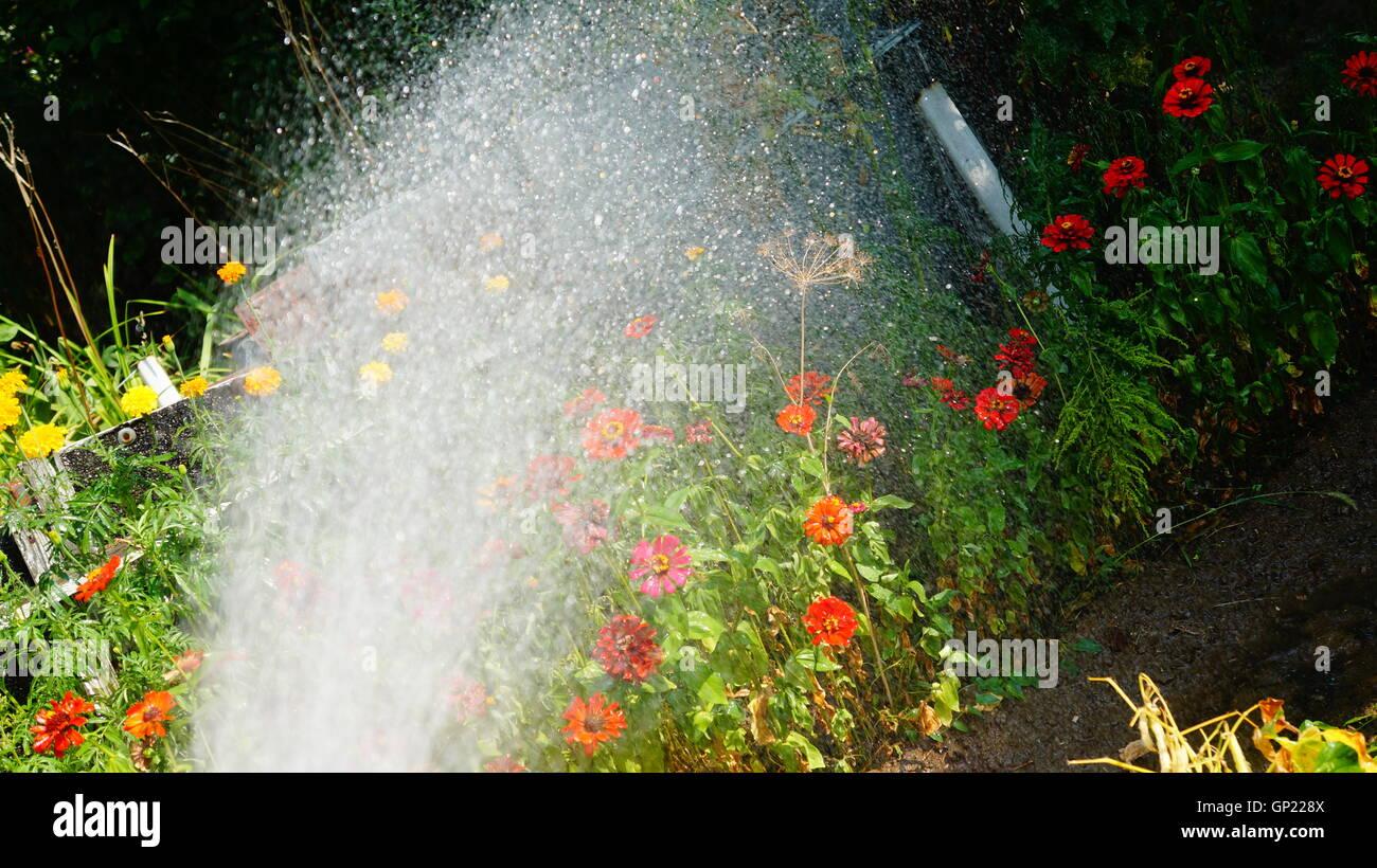 Bilder aus idyllischen Kleingärten und Schrebergärten in Polen Stock Photo