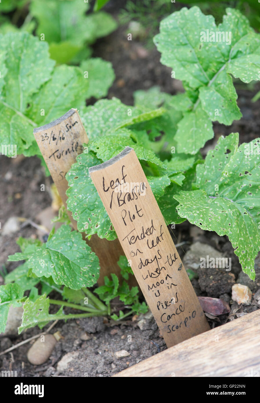 Leaf Brassica plot, Lunar gardening sign at Ryton Organic gardens, Warwickshire, England - Stock Image