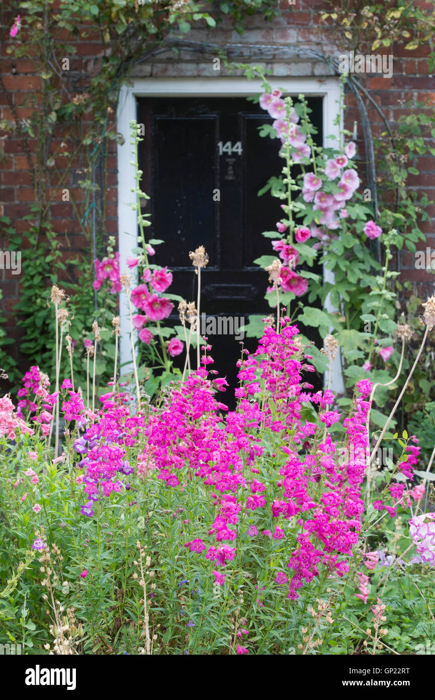 Penstemon flowers in a Cottage garden, Hambleden, Buckinghamshire, England - Stock Image