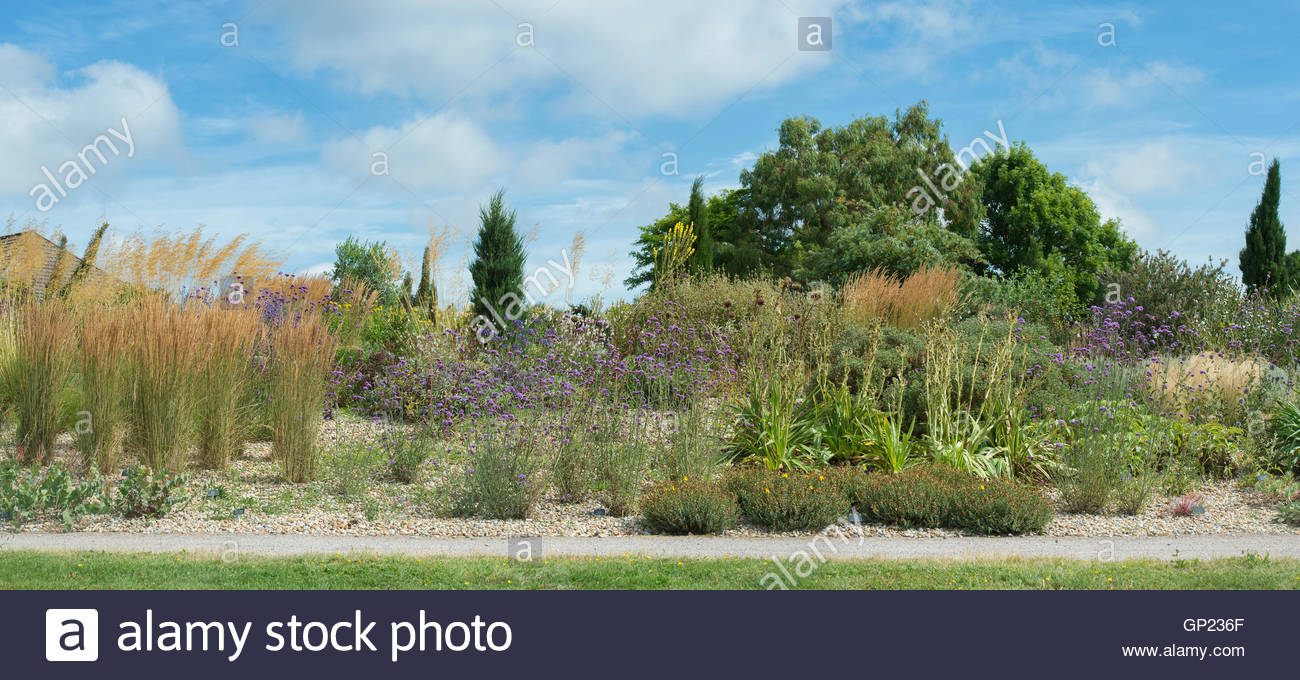 RHS Hyde hall dry garden in the summer, Chelmsford, Essex, UK. Panoramic - Stock Image