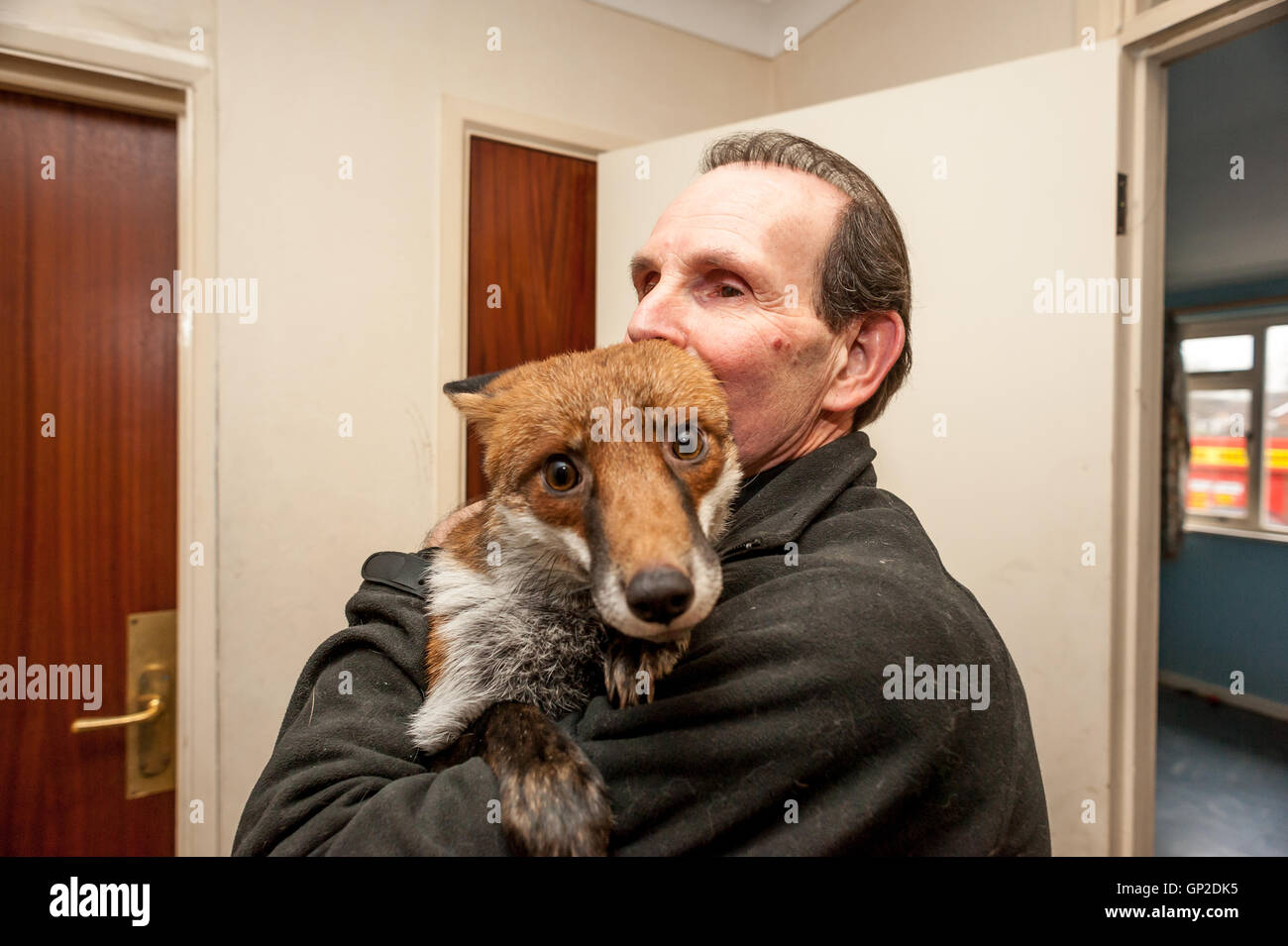 Steve Edgington, of Hassocks, West Sussex, with his pet fox, Miss Snooks. - Stock Image