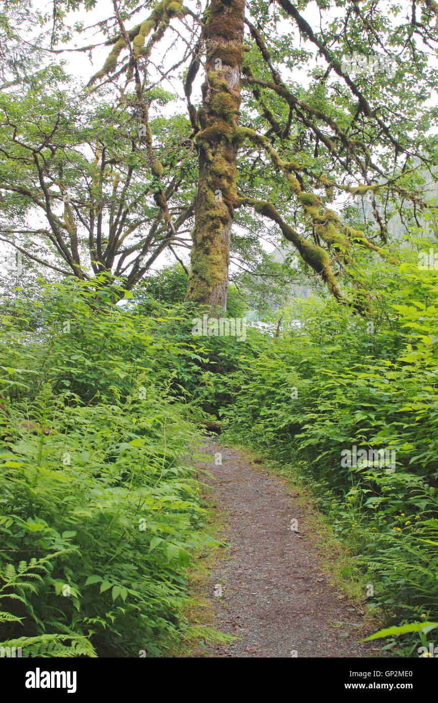 Hiking trail rain forest Tongass National Forest Wrangell Island Inside Passage Southeast Alaska USA - Stock Image