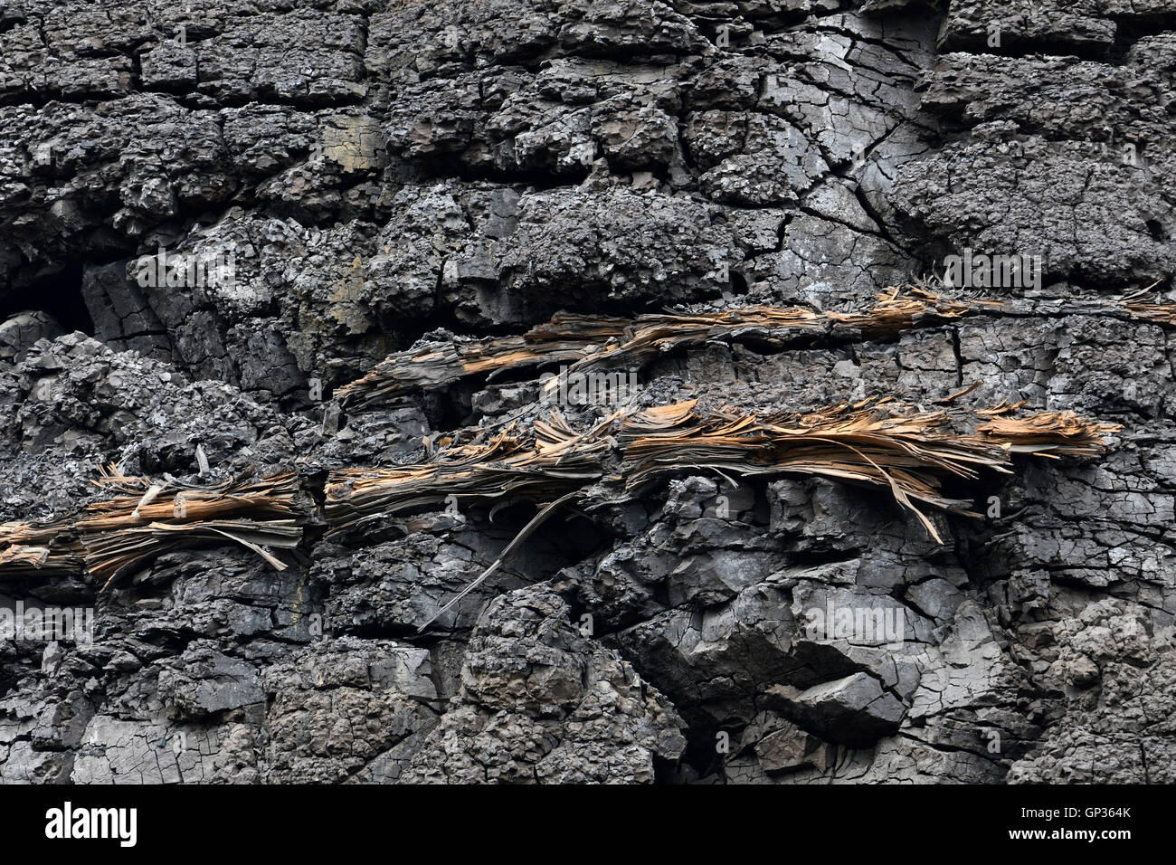 Xyloid Lignite, compressed fossil wood in brown coal / Fossile Holzstämme, Lignit, eingelagert in Braunkohle. - Stock Image