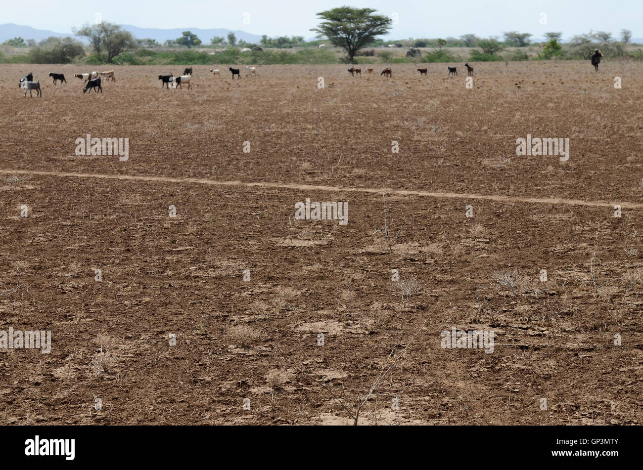 KENYA Turkana Region, Kakuma , Turkana a nilotic tribe, the region suffers from permanent drought problems - Stock Image