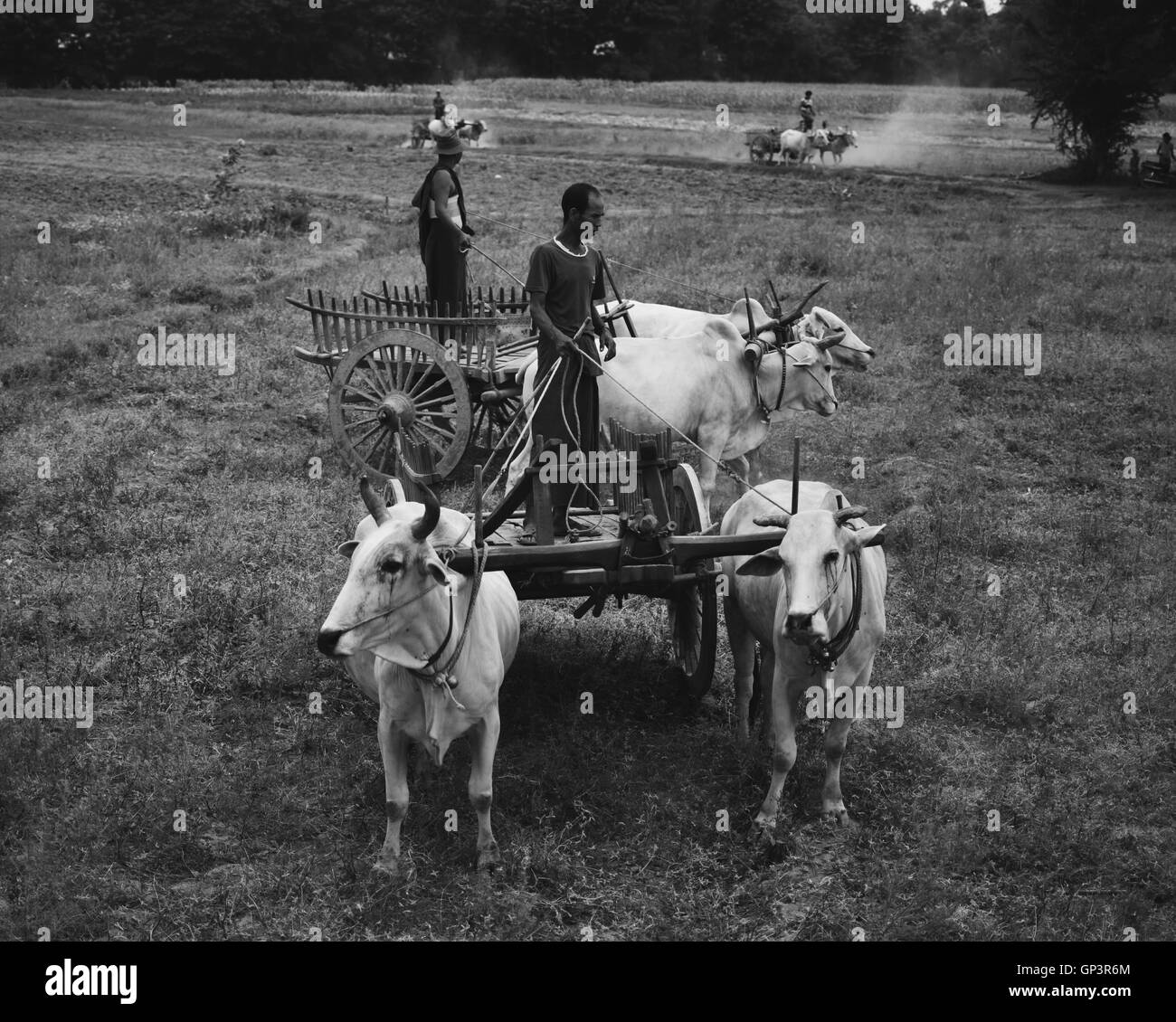 Going back in time using oxcart in Myanmar (Burma) - Stock Image