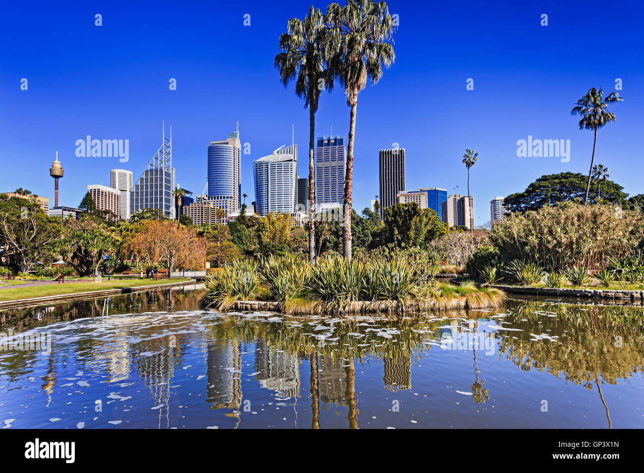 Royal Botanic Garden pond in Sydney with city CBD in a background on horizon reflecting in water. Palm trees and - Stock Image